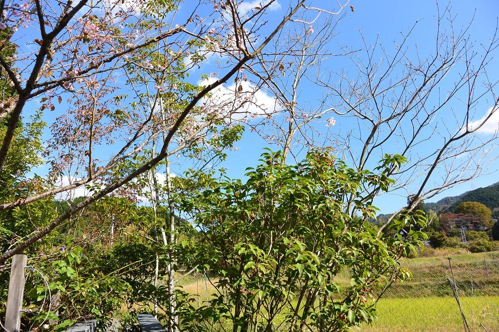 3.MIGIWA10gatu (3).JPG