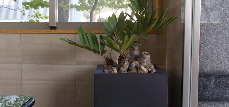 長友産業株式会社 室内観葉植物設置作業 003.JPG