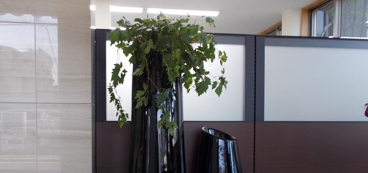 長友産業株式会社 室内観葉植物設置作業 004.JPG