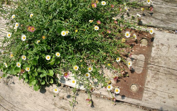 小曽根の庭