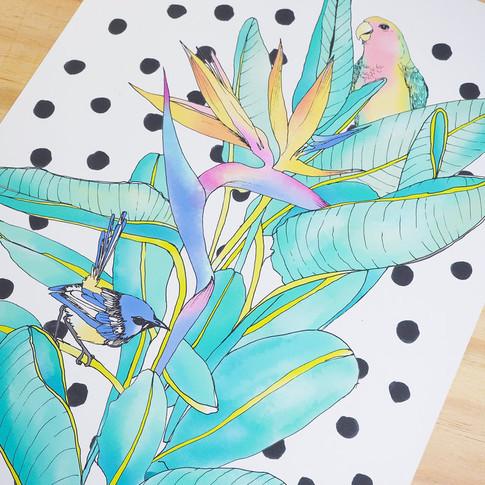birds-of-paradise-closeup.jpg