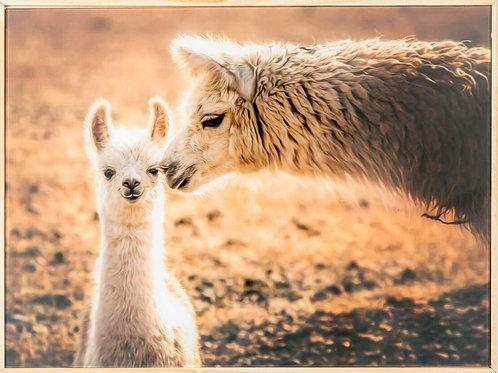 """Llama kisses"" framed artwork"