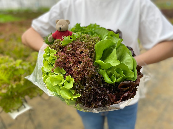 【Sunny Buy】Green Valley 1 Bouquet of Lettuces for Lettuces≥500g (Incl. Shipping)