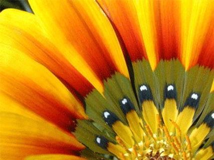 brightflower6-7.jpg