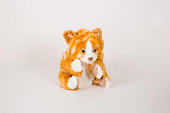 Cat - Orange Tabby