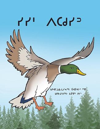 Quack Like a Duck - Oji-Cree Syllabics