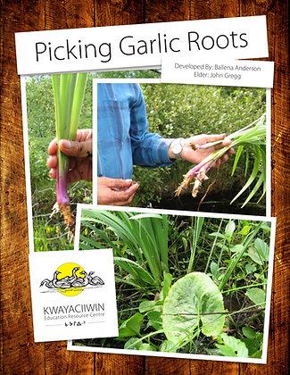 Picking Garlic Roots