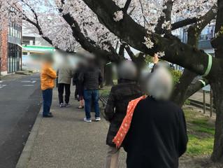 桜を探しに