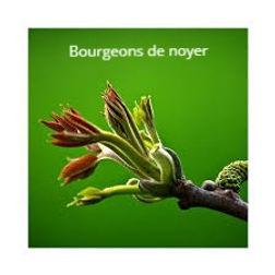 bourgeons%202_edited.jpg