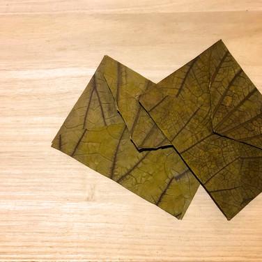 蓮の葉の便箋