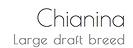 Chianina Large Breed logo