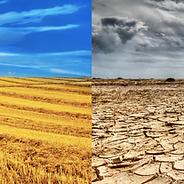 scarcity vs abundance.png