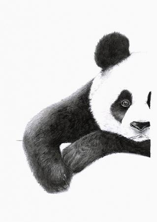 Panda Art Print for A4 frame 225 x 318mm