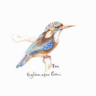 Kingfisher after Ruskin.jpg
