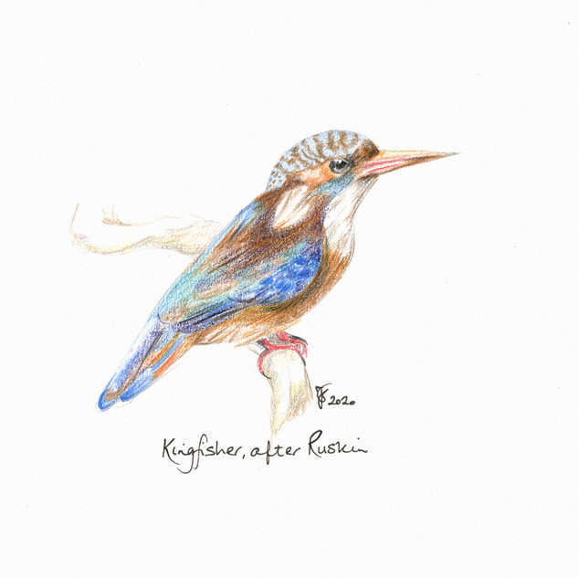 Kingfisher after Ruskin.jpg