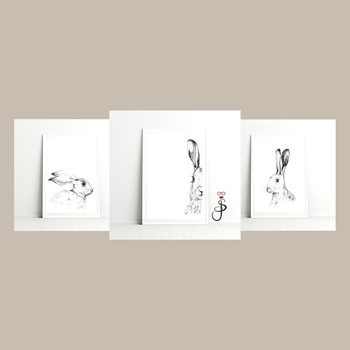 Brown Hare Triptych