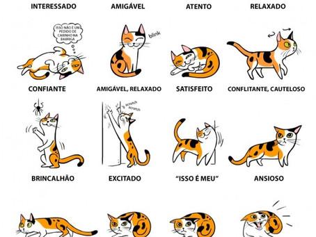 Linguagem dos gatos – saiba o que lhe quer dizer