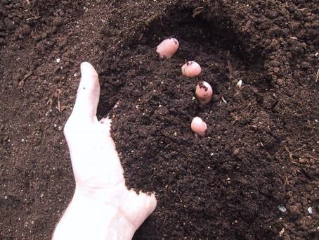 Como deve ser o solo para o cultivo de hortaliças