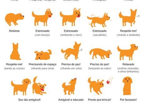Reconheça as reações caninas de acordo com sentimentos e sensações do seu bichinho
