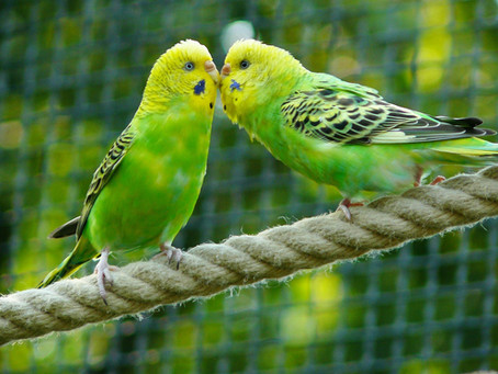 Pássaros: curiosidades e os cuidados mais importantes