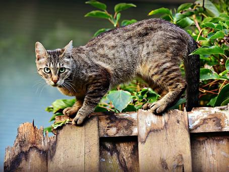 Os melhores repelentes caseiros para afastar os gatos do seu quintal