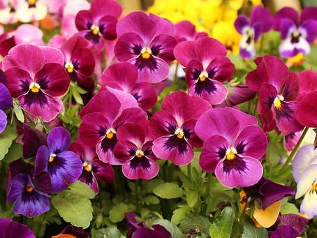 Floreiras de primavera