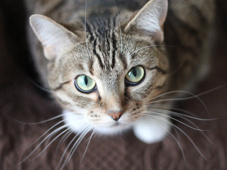 Sabia que: Existem plantas que os gatos adoram e que podem ser benéficas para eles?