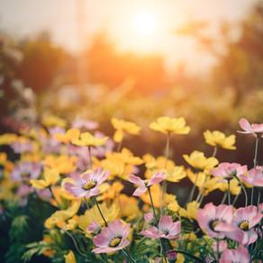 Dicas Para Cuidar do Jardim na Primavera
