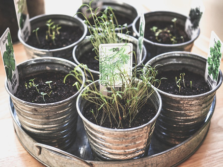 Aprenda a secar ervas aromáticas