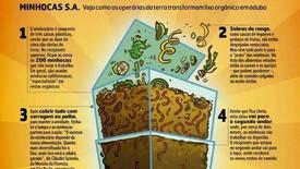 Minhocário - de restos de comida a adubo