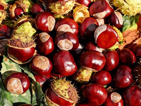 Castanha – Um tesouro nutricional