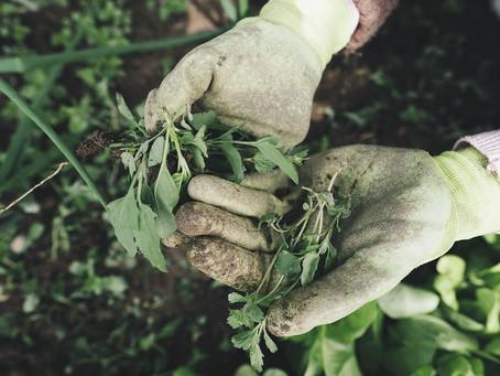 12 alimentos que pode replantar para bem do ambiente