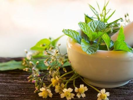 Plantas medicinais: Benefícios