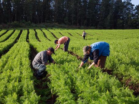 A importância da agricultura familiar para a produção de alimentos