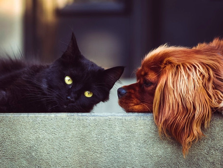 3 dicas para fazer a transição da ração de cães e gatos