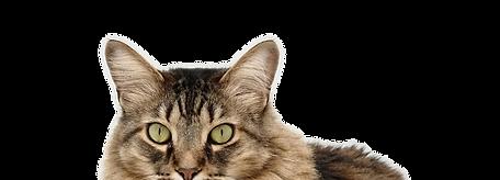 Cat_cutout_01.png