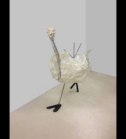 Ostrich 1