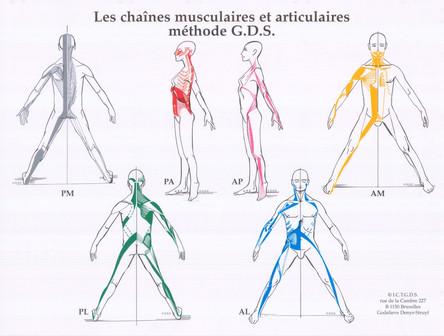 GDS: Conheça um pouco sobre o Método de Cadeias Musculares e Articulares.