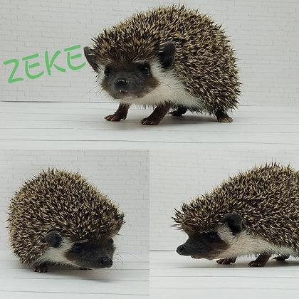 """Zeke"" male Ready after 7/7 - comical explorer (PIF+heat & bath kit A.Karshner)"