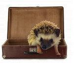 Hedgehog Boarding- $5 per day or $30 per week (plus processing fees)