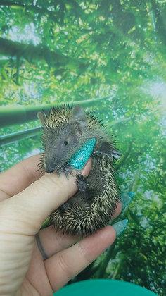 """Cubby"" female Lesser Hedgehog Tenrec- October (J.Johnson)"