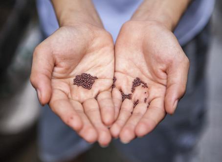 Warum wir altes Saatgut empfehlen