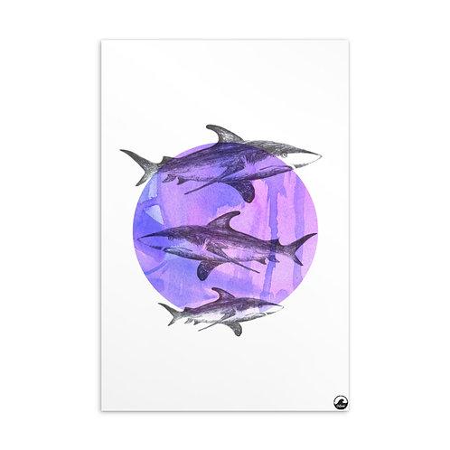 Sharks Standard Postcard