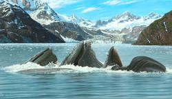 Hopkins Humpbacks