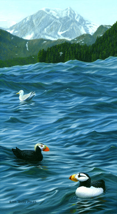 Swell Day for Puffins