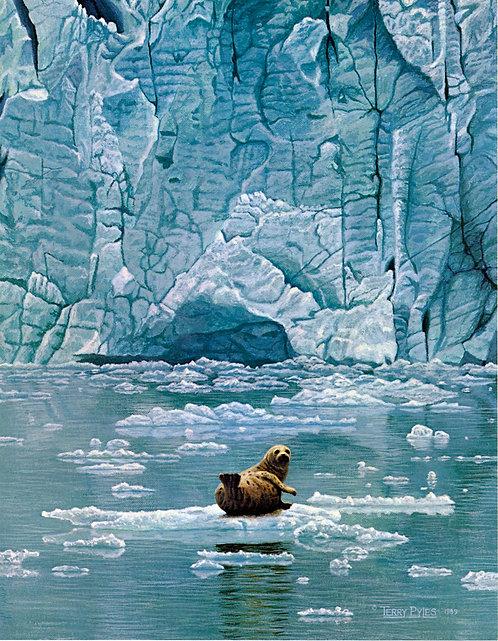 Muir Glacier Harbor Seal