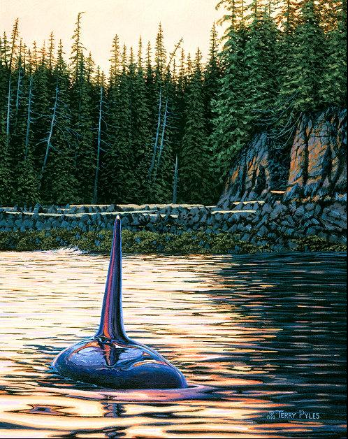 Tatoosh Orca (paper giclee)