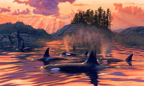East Island Orcas