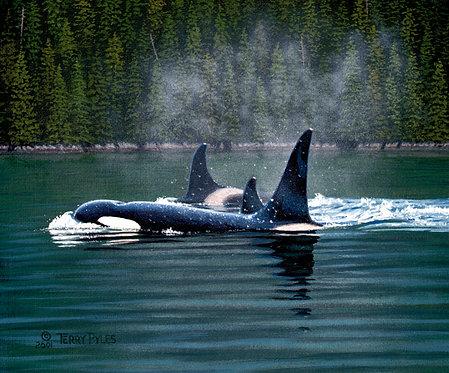 Three Orcas