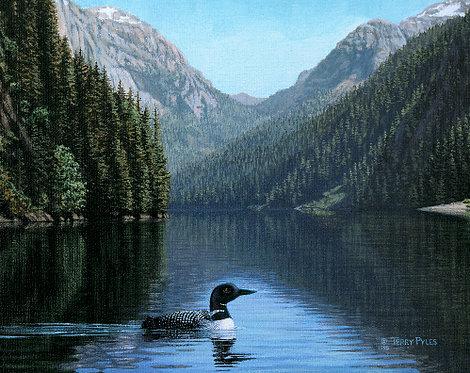 Loon at Humpback Lake